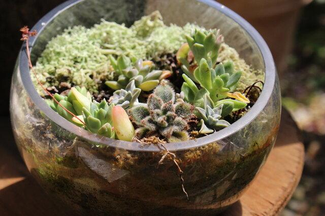 初めてでも簡単にできるテラリウム!植物や小動物を育てながら楽しめる!