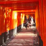 【京都インスタ映え観光スポット】はじめての京都旅行におすすめ!定番のお寺・神社。