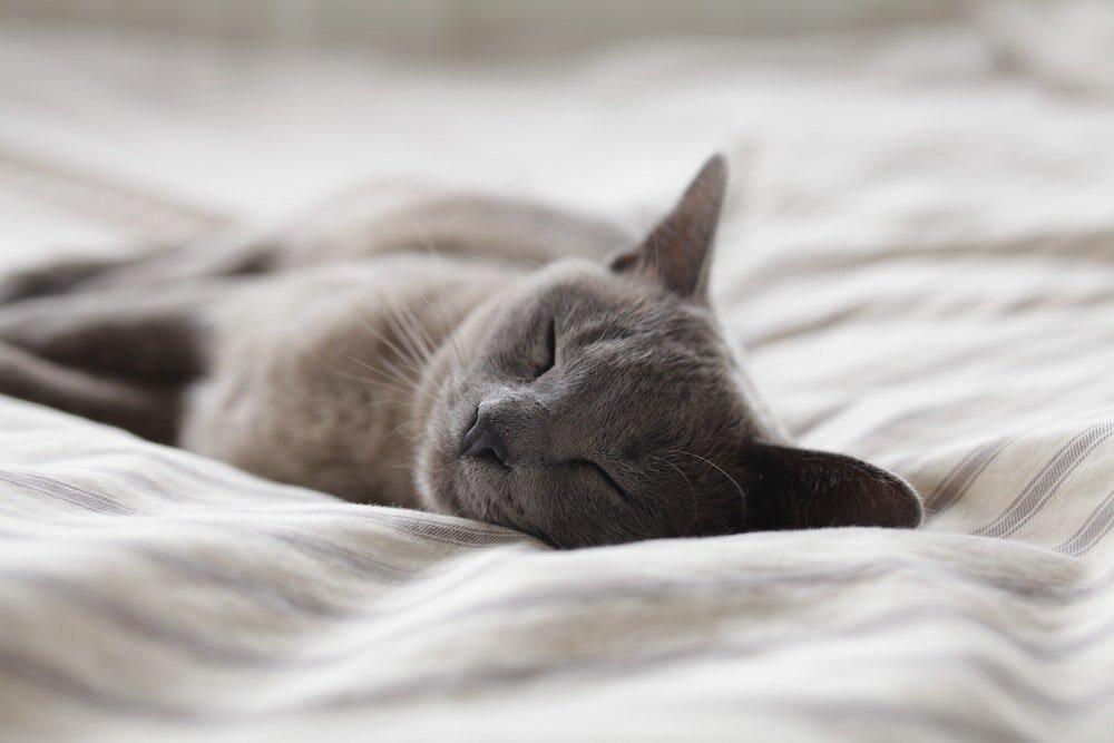 寝ている黒猫