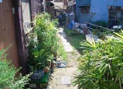 48 墨田区向島地域における非営利事業を織り込んだ住宅更新プログラムの 提案と試行