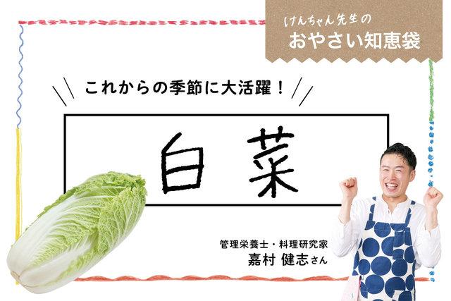 けんちゃん先生のおやさい知恵袋[白菜]