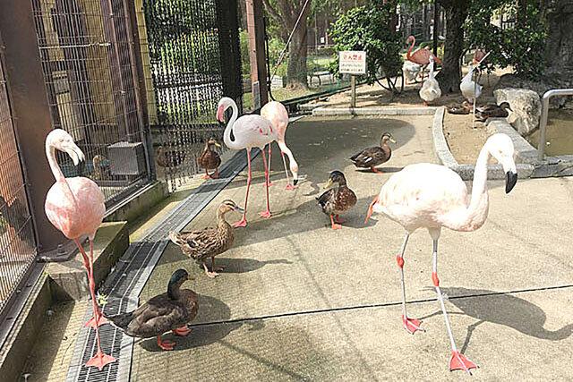 【久留米市】チャーミングな鳥たちでいっぱいの、小さな動物園「久留米市鳥類センター」