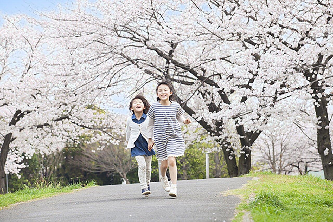 家族で行きたい、福岡のオススメお花見スポット第1話