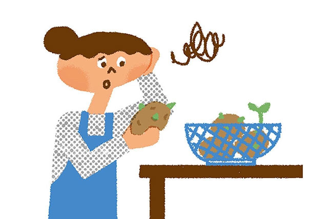 芽が出たじゃがいも、 食べていいの? | 子育て応援サイト CHEER!days