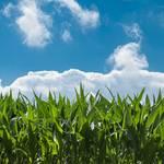 「ファイトケミカル」は健康の味方!|驚くべき植物の栄養パワー