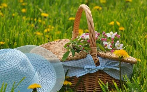basket, beautiful, and grass by ZZoey_Ana | WHI (17729)