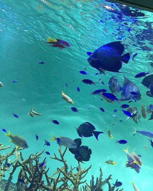 ふうかさんはInstagramを利用しています:「水族館🐠♡・・・#水族館 #エイ怖い #綺麗だった #いいね返し」 (54899)