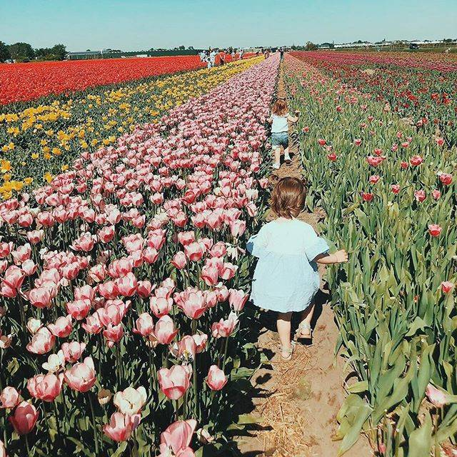 Axelle Irene M 🦄さんはInstagramを利用しています:「Young🌷wild 🌷free🌷 #besties #run #tulips #friendship」 (58160)