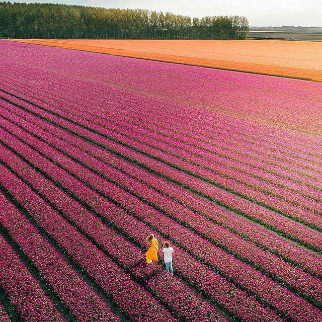 "Your Halal Travel CompanionさんはInstagramを利用しています:「""Travel makes one modest. You see what a tiny place you occupy in the world."" -Gustav Flaubert . A world of tulip. Netherlands. Amazing…」 (58161)"
