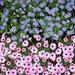 春のセルフネイルはお花柄アートを♡簡単にできるキュートな指先!