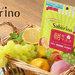 @コスメ限定《サボリーノ 目ざまシート フレッシュマスカットの香り》9月10日より数量限定発売!爽やかな秋の朝にぴったりの香りに包まれて。