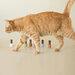 2021新作|rihka(リーカ)の《猫コレクション》に注目!限定ネイルポリッシュでオトナの指先に