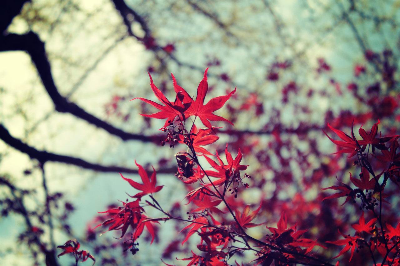 フリー素材「秋」
