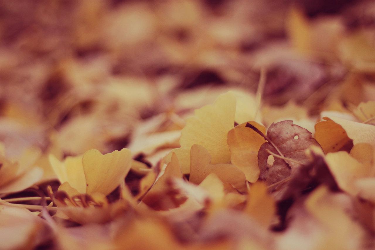 秋 フリー