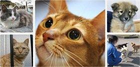 画像:フェリシモ猫部™ わんにゃん支援活動