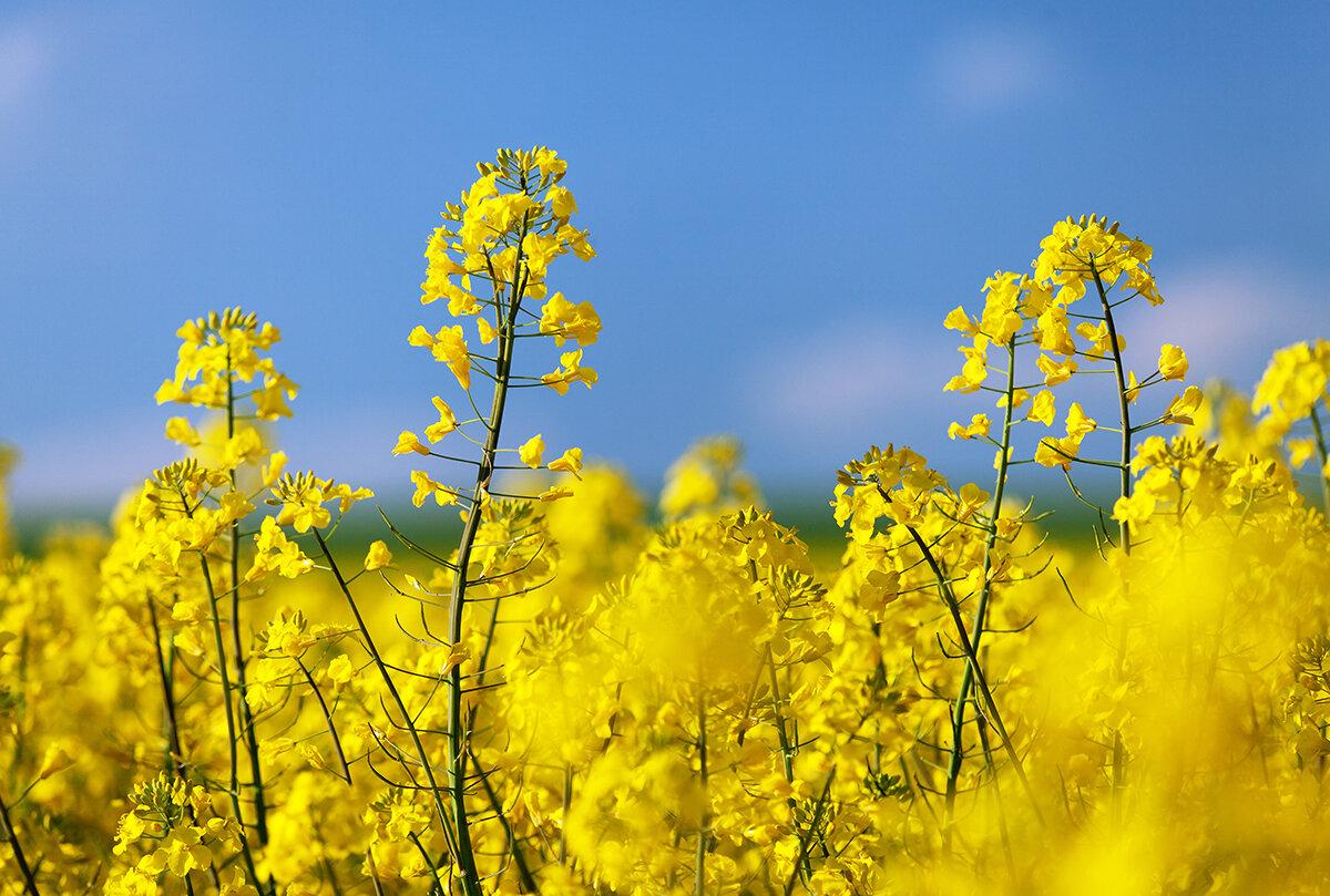 2021春限定 プレミアムルルルン(桜の香り)