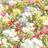 【プチプラ】SWEETS SWEETS (スウィーツ スウィーツ) から春の新商品が登場♡【2017春夏コスメ】
