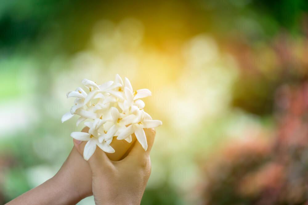 女性らしい香りが魅力のガーデニア(クチナシ)。効能やおすすめの香水を紹介