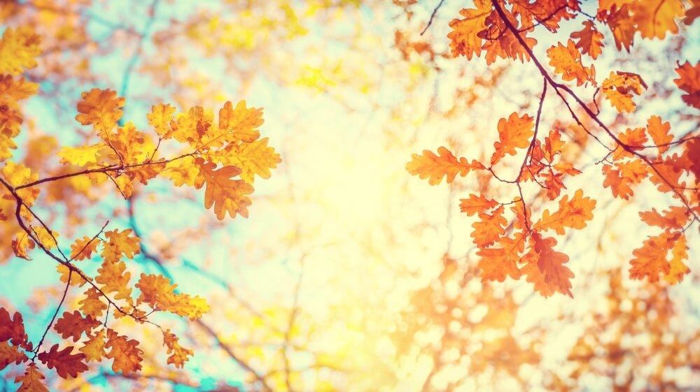 暑さの中に涼しさを感じたら「秋バテ」の症状に注意!予防策・いざという時の解消法