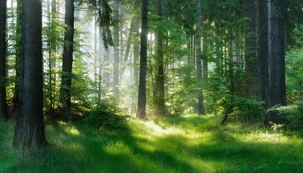 木漏れ日がさし込む森