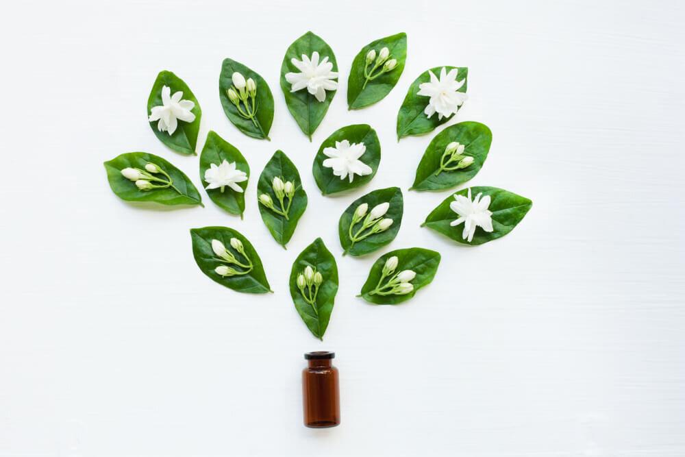 ジャスミンの葉に置かれた花