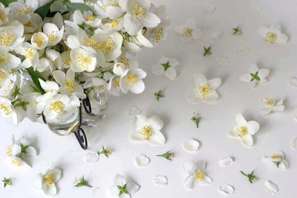 白い背景に散りばめられたジャスミンの花