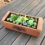 アンティークな木箱を使ったテーブルプラント、多肉植物編