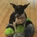 毛糸ポンポン作って愛犬へあったかマット