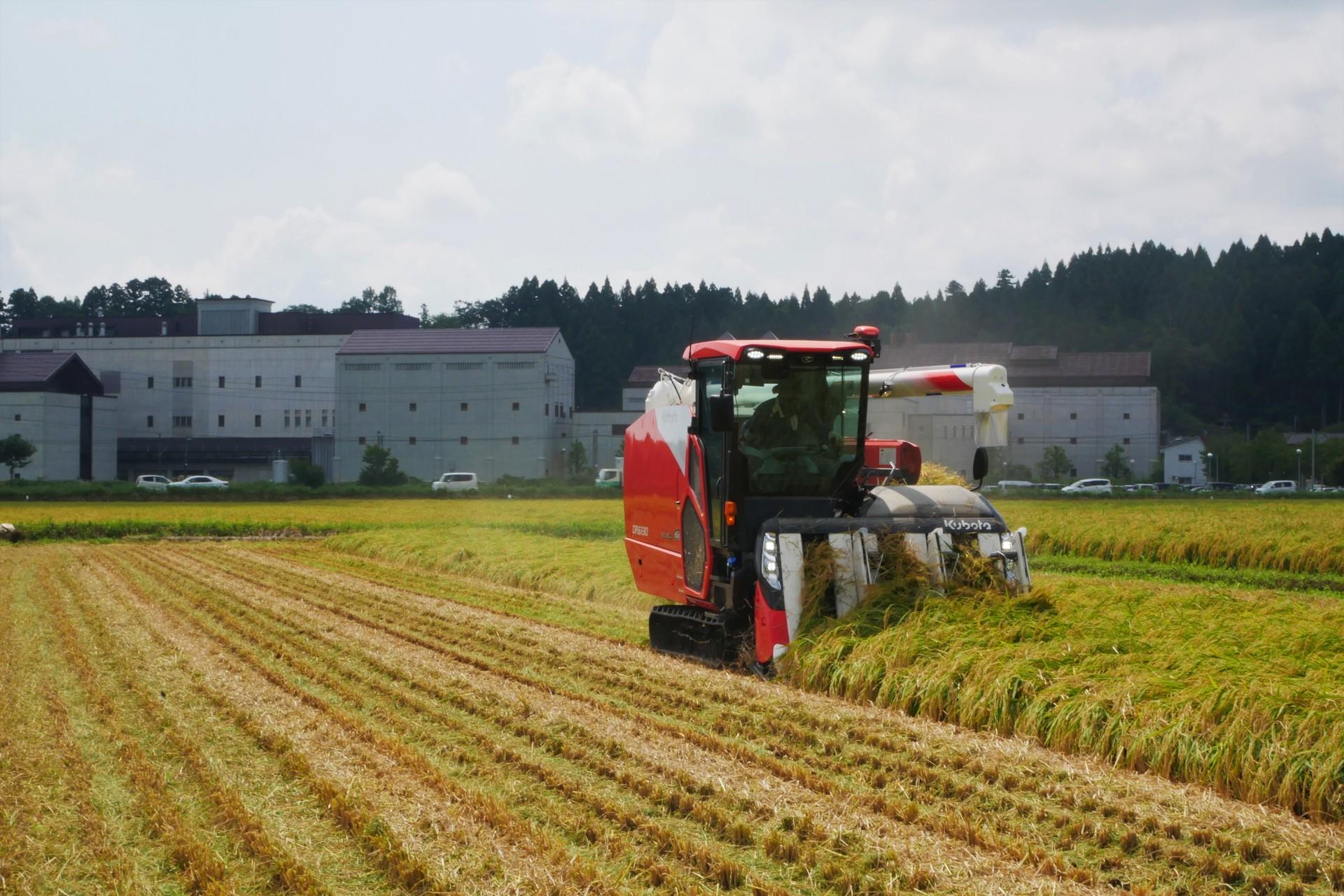 酒造りは、米づくりから。黄金色の世界のなか、稲刈りがスタート