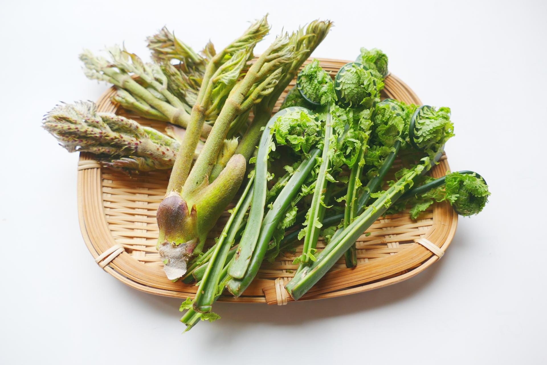 雪国で採れる春の山菜。山菜料理に合う新潟県の日本酒も紹介