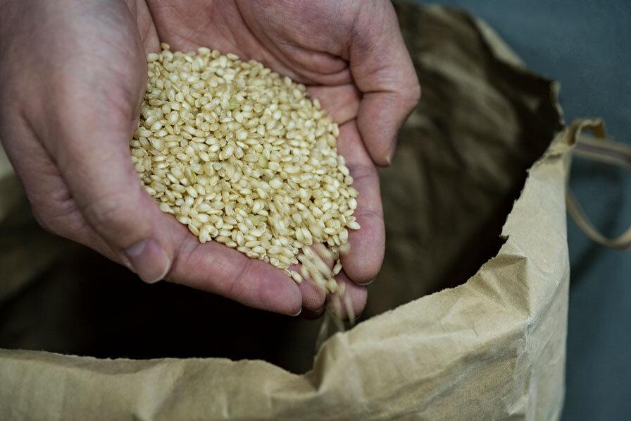 日本酒原料の米を手で掬う様子