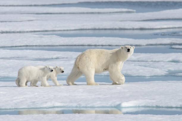 【杉山大志】気候危機説はフェイク~隠蔽された「不都合な...