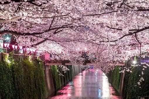 桜、開花🌸2020版 お花見のできる目黒川沿いおすすめレストラン