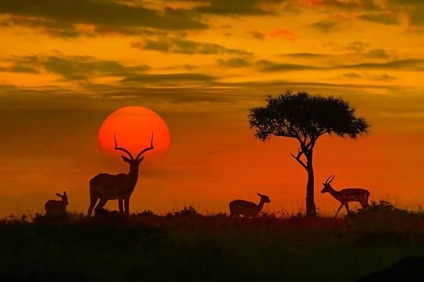 「いつかは住みたい」ケニアでの生活費