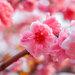 【あさイチ】グリーンスタイル 「ひな祭り」に花を飾ろう