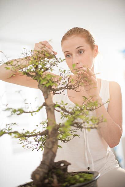 【あさイチ】グリーンスタイル「盆栽」ってなあに?