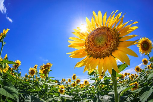 夏はどうしても紫外線を浴びることが多いもの。
