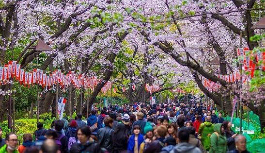 Ueno Park in April