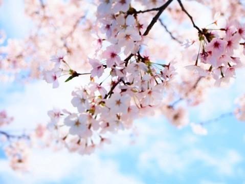 思い出の「旅立ちソング&卒業ソング」は? 恵比寿横丁で聞いてみた!尾崎豊、AAA、ケツメイシ、青春の名曲たち…!