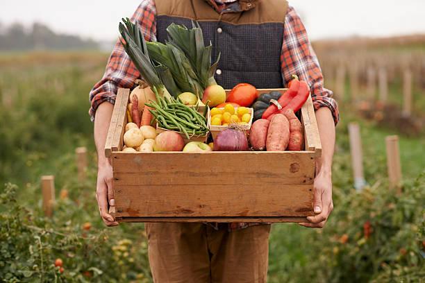 有機野菜、まずはそのままバリバリっと、召し上がれ。野菜...