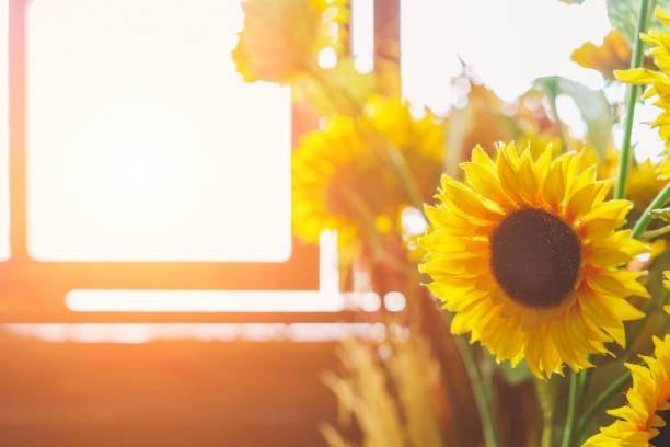夏の窓辺に飾りたいヒマワリ