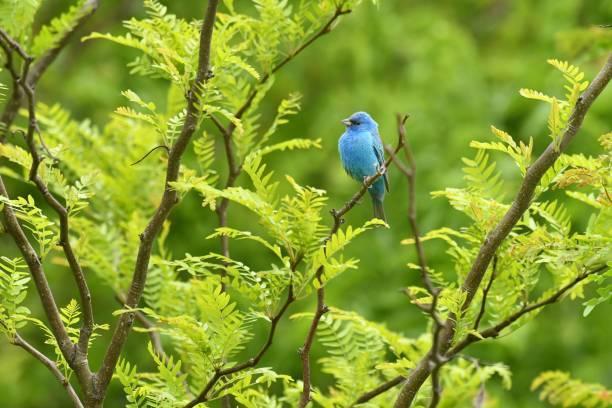 青い鳥は幸福の象徴?