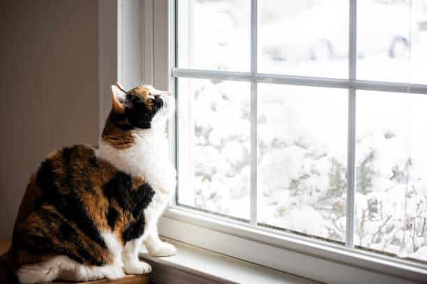 雪の中で鳥が飛んでる
