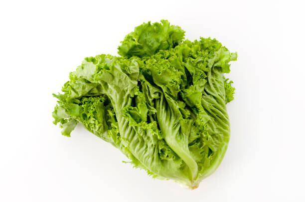 葉物野菜に包んで食べる文化があるの?
