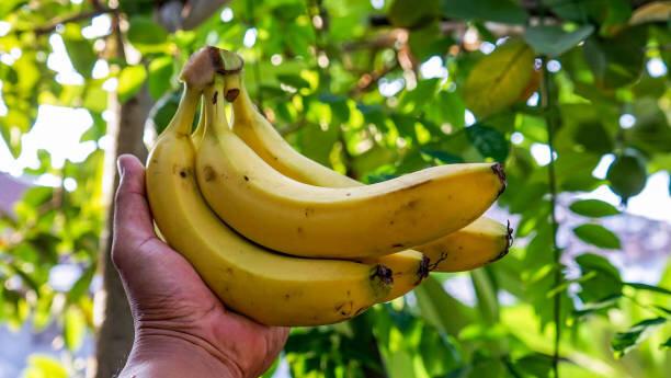 エネルギー補給には最適なフルーツ