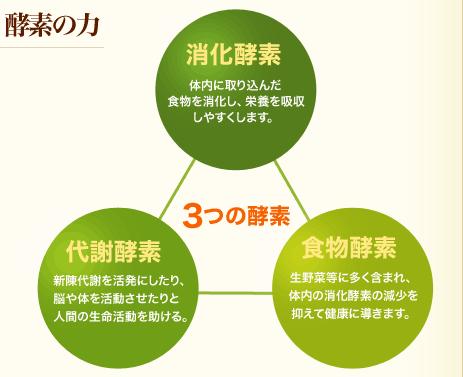 バランスが大切な3つの酵素