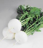 ブランド京野菜(秋冬物)/京都府ホームページ (26425)