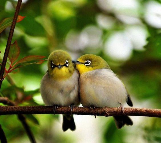 目の周りが白いことから「めじろ」と呼ばれる「鳥」。 一...