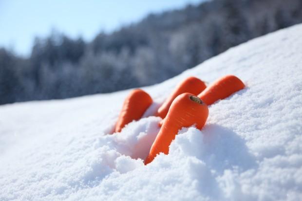 まるで果物のように甘いと言われる「雪下にんじん」