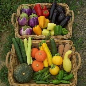 八ヶ岳Yesファームの野菜たち -八ヶ岳Yesファーム (33555)